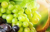 grozdje_530485fa2229a-735x303