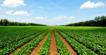 poljoprivredno-zemljiste-na-prodaju-u-srbiji-620x330