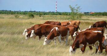 poljoprivreda stocarstvo